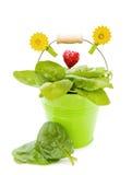 Espinafre fresco na cubeta verde Fotografia de Stock