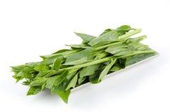 Espinafres de Malabar ou espinafres de Ceilão (Basella Linn alba.). Fotos de Stock Royalty Free