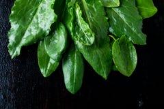 Espinafres molhados no fundo preto Fruto verde detox Fotografia de Stock Royalty Free