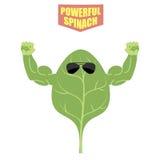Espinafres poderosos Uma planta forte com músculos grandes Verde, fresco Fotos de Stock Royalty Free