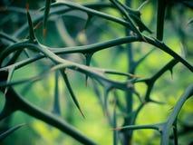 Espinas Foto de archivo libre de regalías