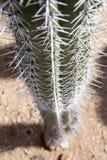 Espinas del cactus Foto de archivo libre de regalías
