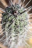 Espinas 2 del cactus Fotos de archivo