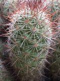Espinas del cactus Fotografía de archivo