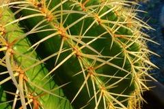 Espinas dorsales del cactus fotos de archivo