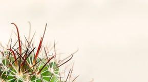 Espinas dorsales del cactus en un fondo ligero Dolor de hemorroides, ardor de estómago, garganta Macro fotografía de archivo libre de regalías