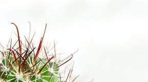 Espinas dorsales del cactus en un fondo ligero Dolor de hemorroides, ardor de estómago, garganta Macro fotografía de archivo