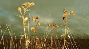 Espinas en un campo Fotografía de archivo libre de regalías
