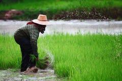 Espinha tailandesa de s Fotos de Stock