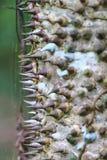 Espinhas da árvore imagens de stock