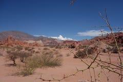 Espinho no deserto alaranjado - Quebrada de las conchas/ravina dos escudos - cafayate, Argentina fotografia de stock
