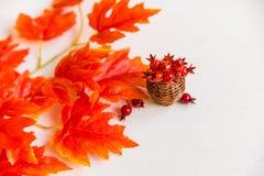 Espinho no vaso e no conceito vermelho da queda das folhas de bordo Fotos de Stock Royalty Free