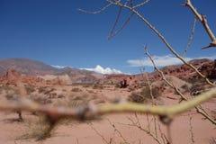 Espinho - Quebrada de las conchas/ravina dos escudos - cafayate, Argentina imagem de stock