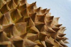Espinhos do Durian Imagem de Stock Royalty Free