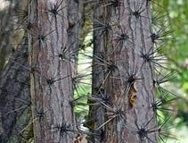 Espinhos na casca foto de stock