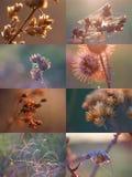 Espinhos secos e Web de aranha imagens de stock