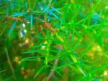 Espinhos verdes imagens de stock royalty free