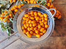 Espino cerval de mar Bayas orgánicas maduras frescas Foto de archivo libre de regalías