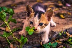 Espionnage de chatons Photo stock