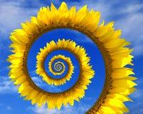 Espiral abstrata do girassol Imagem de Stock