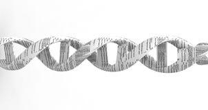 espiral de la DNA 3d Fotos de archivo libres de regalías
