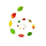 Espiral do outono Fotografia de Stock Royalty Free