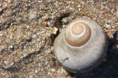 Espiral dourada da vida foto de stock