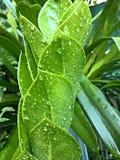 Espiral verde Fotografia de Stock