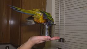 Espirro de assento do papagaio colorido do pássaro no banheiro video estoque