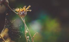 Esplendor del verano indio en otoño Imagen de archivo libre de regalías