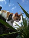 Esploratore del gatto fotografia stock
