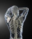 Esplorazione della parte posteriore dell'essere umano Fotografie Stock Libere da Diritti