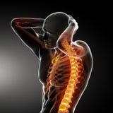 Esplorazione della spina dorsale del corpo maschio Immagine Stock Libera da Diritti