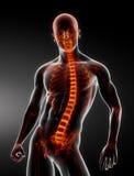 Esplorazione della spina dorsale del corpo maschio Immagini Stock Libere da Diritti