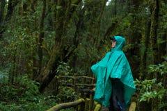 Esplori il fondo della foresta pluviale con i muschi e la felce verdi Fotografia Stock Libera da Diritti