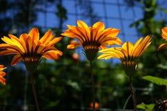 Esplosione arancio Fotografie Stock