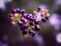 Esplosione dei frutti fotografie stock
