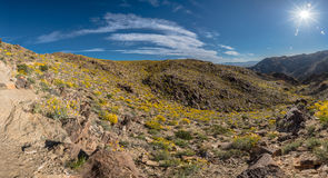 Esplosione solare luminosa sopra la fioritura del deserto Immagine Stock Libera da Diritti