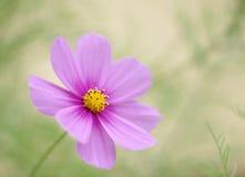Espoir coloré de fleur Images libres de droits