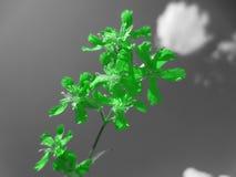 Espoir vert Photographie stock libre de droits