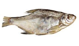 Espolón secado de los pescados en un fondo blanco Fotografía de archivo libre de regalías