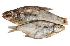 Espolón secado de los pescados en un fondo blanco Fotos de archivo libres de regalías