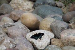 Esponendo al sole su una roccia Fotografie Stock Libere da Diritti