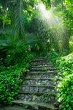 Esponga al sole i raggi attraverso gli alberi nella pioggia Fotografia Stock