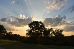 Esponga al sole i raggi attraverso un albero a Fort Worth il Texas Immagini Stock