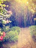 esponga al sole i raggi che passano sopra del giardino invaso di A la bella porta rustica e segreto al tramonto a Fotografie Stock
