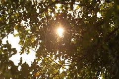 Esponga al sole i raggi tramite le foglie di un albero Immagini Stock Libere da Diritti