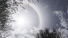 Esponga al sole il bianco di alone alcuni rami di albero e della roccia Fotografie Stock Libere da Diritti