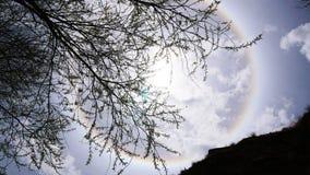 Esponga al sole il bianco di alone alcuni rami di albero e della roccia Immagine Stock Libera da Diritti