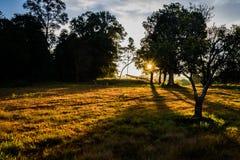 esponga al sole l'aumento nella foresta alla mattina con la linea d'ombra Immagine Stock